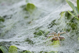Sheet Spiders with Webs, Los Angeles, California Papier Photo par Rob Sheppard
