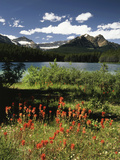 Canada  Alberta  Banff NP  Indian Paintbrush Wildflowers and a Lake