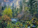 Utah Along Logan River in Autumn Logan Canyon Uinta-Wasatch-Cache