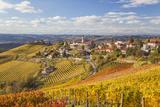 Vineyards  Treiso  Alba  Langhe  Piedmont  Italy
