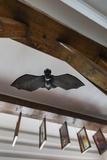 Romania  Transylvania  Tihuta Pass  Hotel Castel Dracula  Bat Art