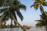 Traditional Houseboat  Kerala Backwaters  Alleppey  Kerala  India