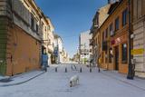 Romania  Constanta  Piata Ovidiu  Ovid Square  Street with Lone Dog
