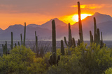 USA  Arizona  Saguaro National Park Sunset on Desert Landscape