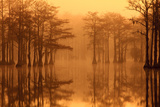Georgia  Fall Cypress Trees in the Fog at George Smith State Park