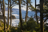 Coastline at Cannon Beach, Viewed Through the Trees, Ecola SP, Oregon Reproduction photo par Brian Jannsen