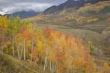 USA  Colorado  Gunnison NF Aspen Grove at Peak Autumn Color