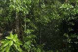 Rainforest Rain Storm  Yasuni NP  Amazon Rainforest Ecuador