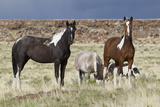 Wild Horses  Steens Mountains