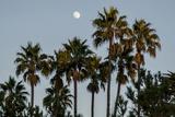 California  Santa Barbara  Bird Sanctuary at Full Moon  Palm Trees