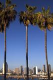 USA  California  San Diego San Diego Skyline and Palm Trees