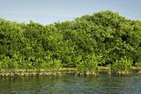 Canoeing Through the Mangroves  La Cienaga de La Vorgin  Colombia