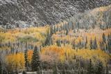 USA  Colorado  San Juan Mountains Autumn Snowfall on Forest