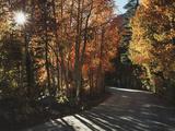 California  Sierra Nevada  Autumn Colors of Aspen Trees in Inyo NF
