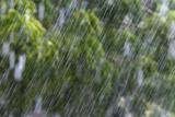 Rain in the Forest  North Rupununi  Southern Guyana
