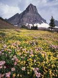 USA  Montana  Glacier National Park  Wildflowers and a Mountain Peak