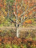 USA  Michigan  Upper Peninsula Fall Colors in Hiawatha NF