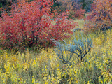 Forest Vegetation in Fall Green Canyon Uinta-Wasatch-Cache NF  Utah