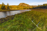 Dune Grasses and a Tidal Creek Lead to 'The Beehive'  Acadia NP  Maine