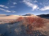Nevada Usa Vegetation on Dunes Below Sand Mountain Great Basin
