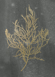 Gold Foil Algae III on Black Reproduction d'art par Jennifer Goldberger