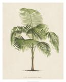 Les Palmiers I