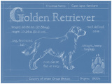 Blueprint Golden Retriever