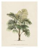 Les Palmiers IV