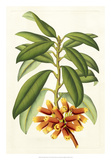 Tropical Rhododendron I