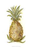 Pineapple Sketch I