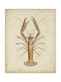 Crustaceans I
