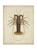 Crustaceans II