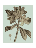 Flowering Trees IV