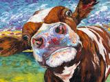 Curious Cow I Reproduction d'art par Carolee Vitaletti