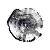 Tree Ring Abstract I