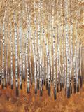 Sienna Birches I