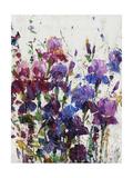 Iris Blooming I