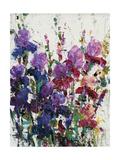 Iris Blooming II