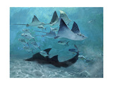 Four Eagle Rays  Shark and Permit School  2000