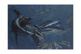 Broadbill  Mako and Sea Arrows  New Jersey  1988
