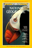 Cover of the March  1979 National Geographic Magazine