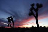 Sunset in Joshua Tree National Park  California