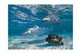 Two Bonefish and Coral Clump with Crab at Chub Bay