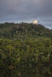 Cassowary Habitat in Queensland's Wet Tropics World Heritage Area
