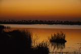 Silhouetted Reeds in a Spillway at Sunset