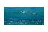 Cuda  King of Sardines: Sphyraena Argentea  a Pacific Barracuda over a Blanket of Future Meals