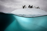 Chinstrap Penguins on an Ice Floe Off the Coast of Dank Island