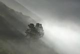 Fog Enshrouds the Coastal Cliffs of Big Sur