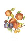 Harvest Medley I