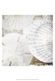White Shells II Reproduction d'art par Irena Orlov